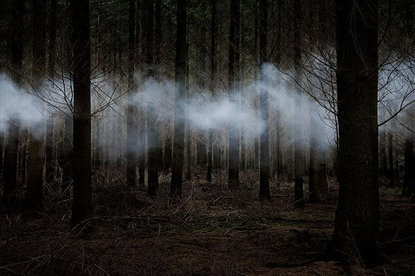 Between the Trees: Photos  Ellie Davies