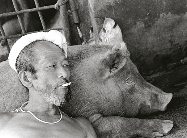 Свиньи и папа-5