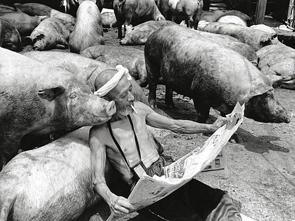 Свиньи и папа-7