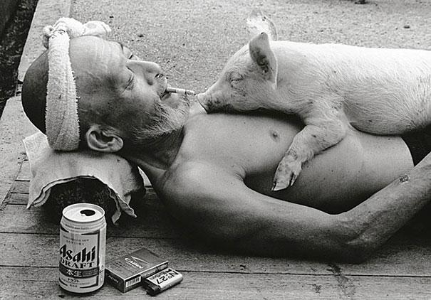 Свиньи и папа-3