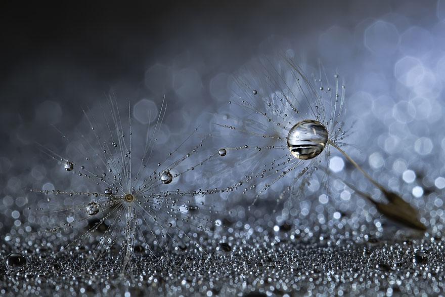 Удивительные макрофотографии Мики Асаи-17