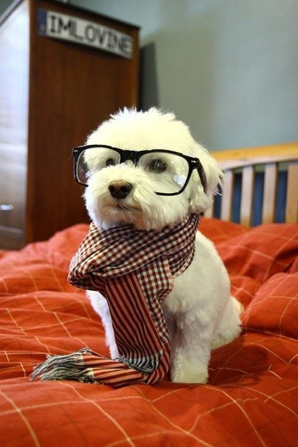 Милые и игривые щенки - 50 фотографий