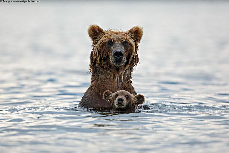 Медведицы и медвежата - 20 дивных фотографий-14