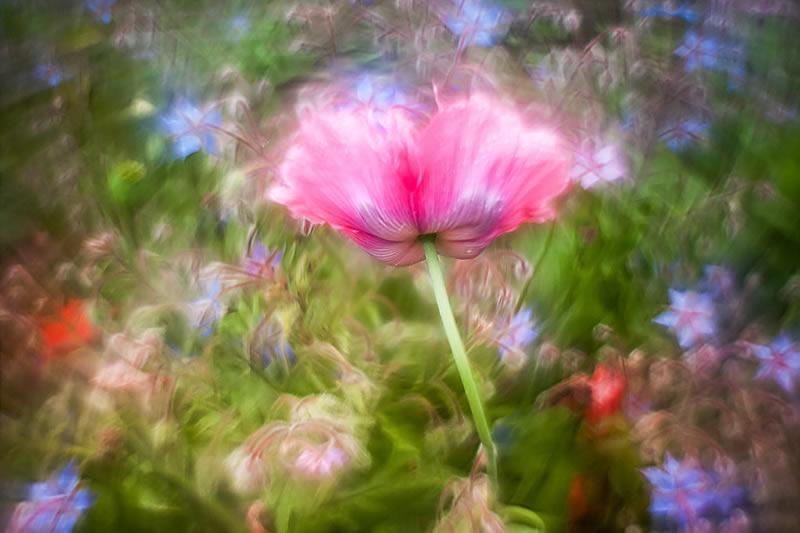Садовые макрофотографии с красивым боке