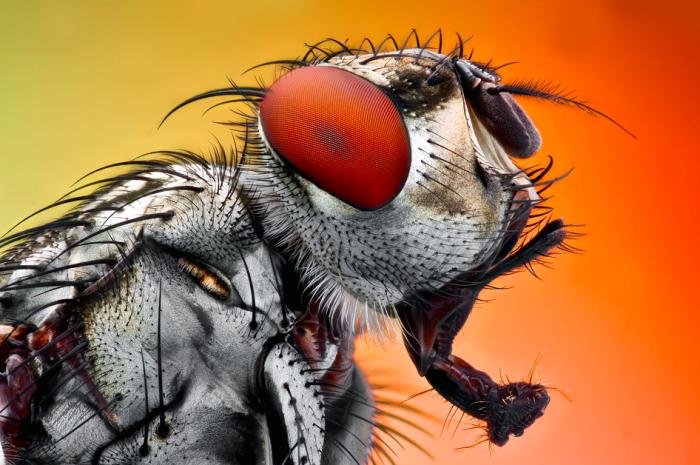 Микромир с глазу на глаз - макрофотографии насекомых