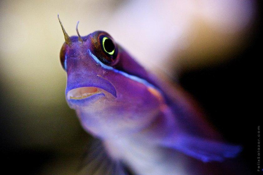 Фантастические макрофотографии коралловых рифов Феликса Салазара