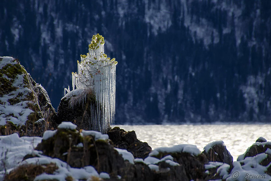 Замороженное дерево-13
