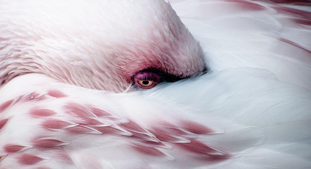 Melanholiia Flamingo