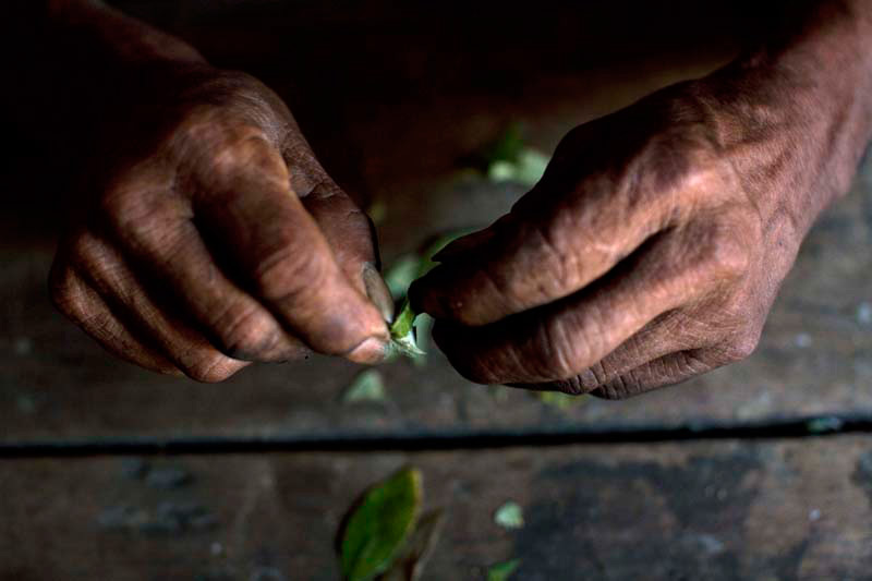 Фотографии поселений в Колумбии, зависящих от выращивания коки