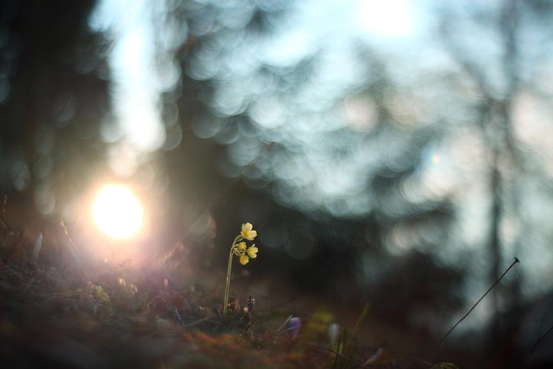 Супер светосильные объективы с ручной фокусировкой и диафрагмой f/0.95