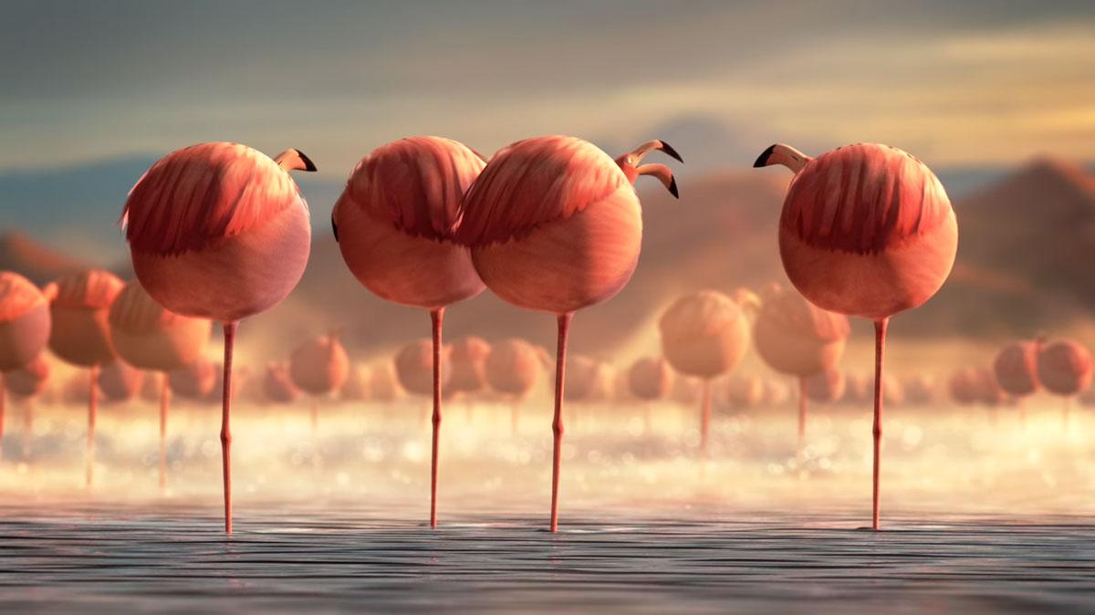 Среди фламинго