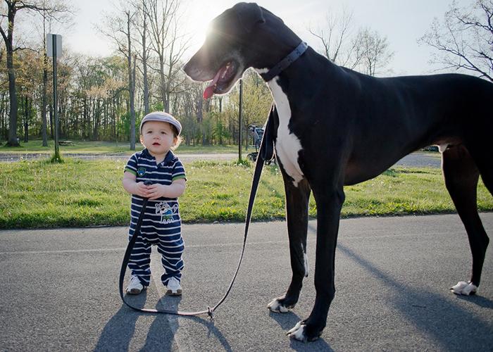 Маленькие дети и их большие собаки - 22 фото-29