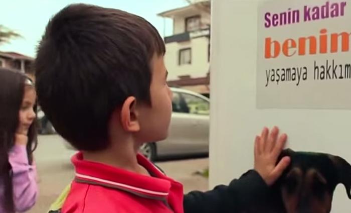 Вендинговый автомат принимает бутылки и выдаёт пищу для бездомных собак-5