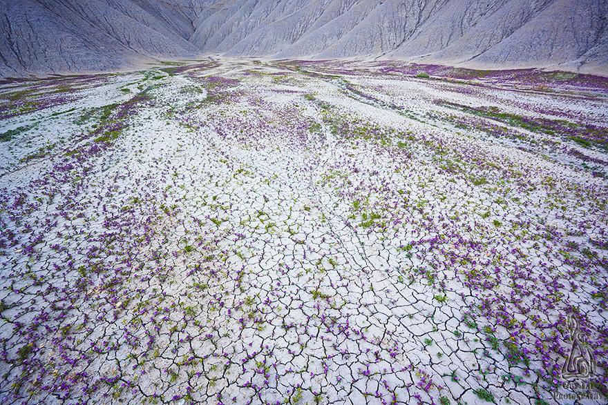 Взрыв цветов в пустыне-10
