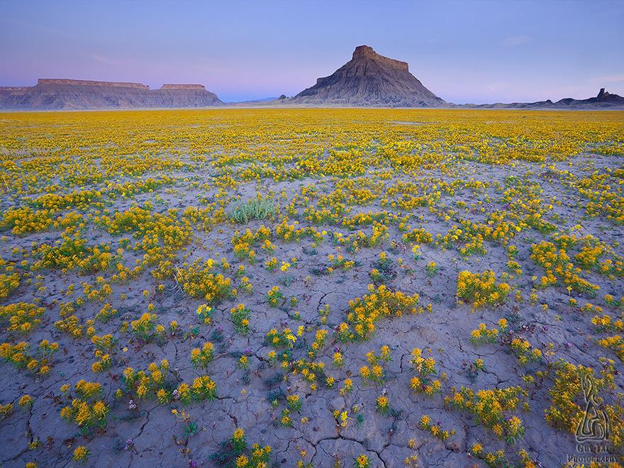 Взрыв цветов в пустыне-7