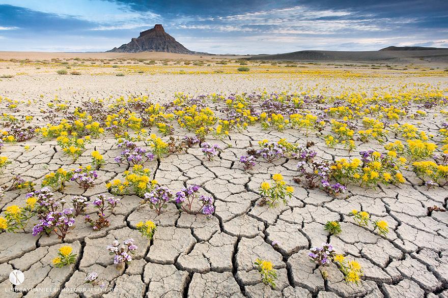 Взрыв цветов в пустыне-11