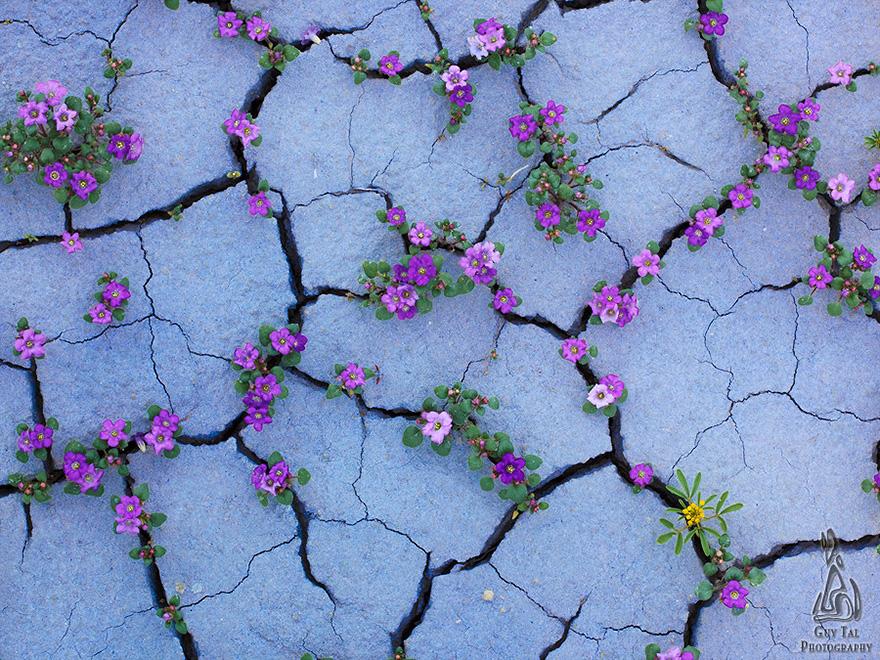 Взрыв цветов в пустыне-6