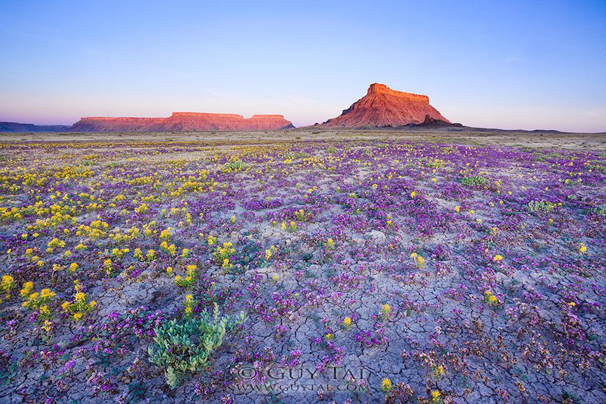 Взрыв цветов в пустыне-9