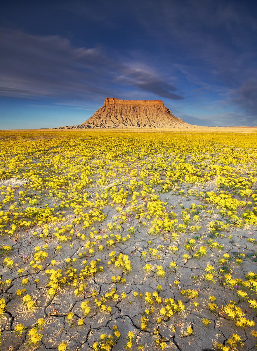Взрыв цветов в пустыне-3