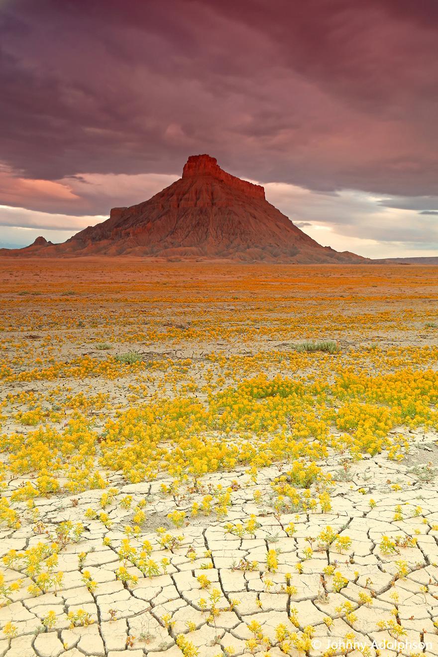 Взрыв цветов в пустыне-12
