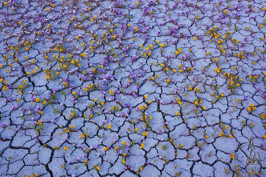 Взрыв цветов в пустыне-2