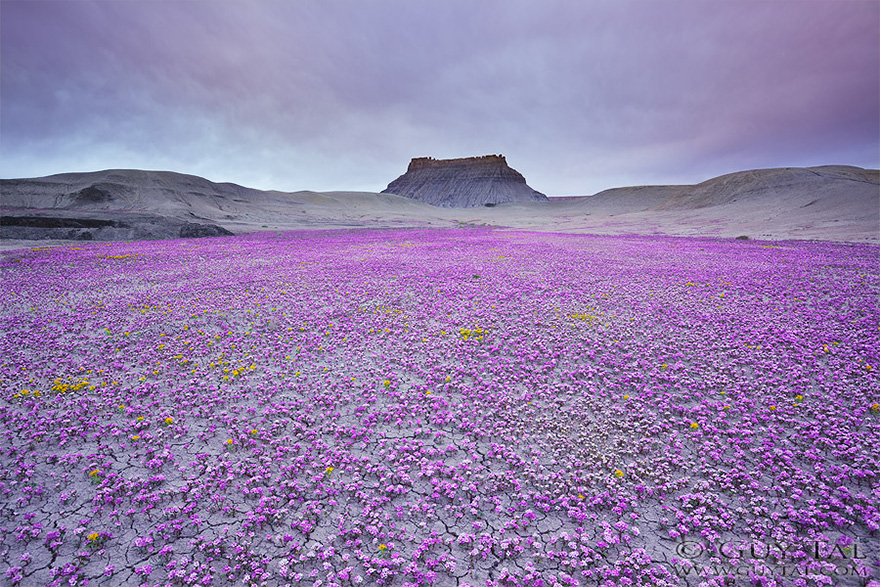 Взрыв цветов в пустыне-1