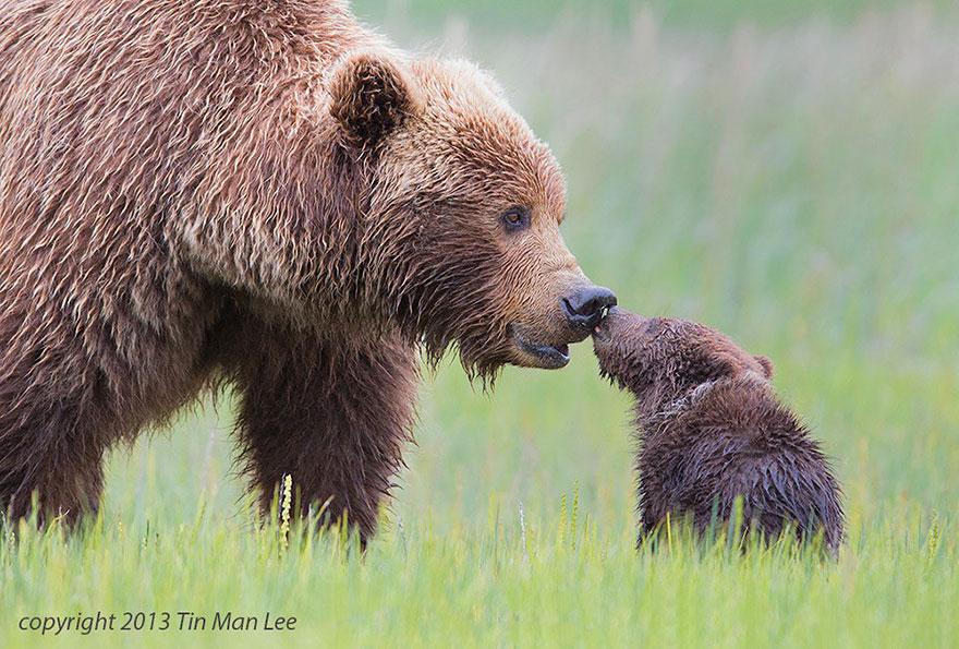 Отцы и дети в царстве животных - 25 самых очаровательных фотографий-40
