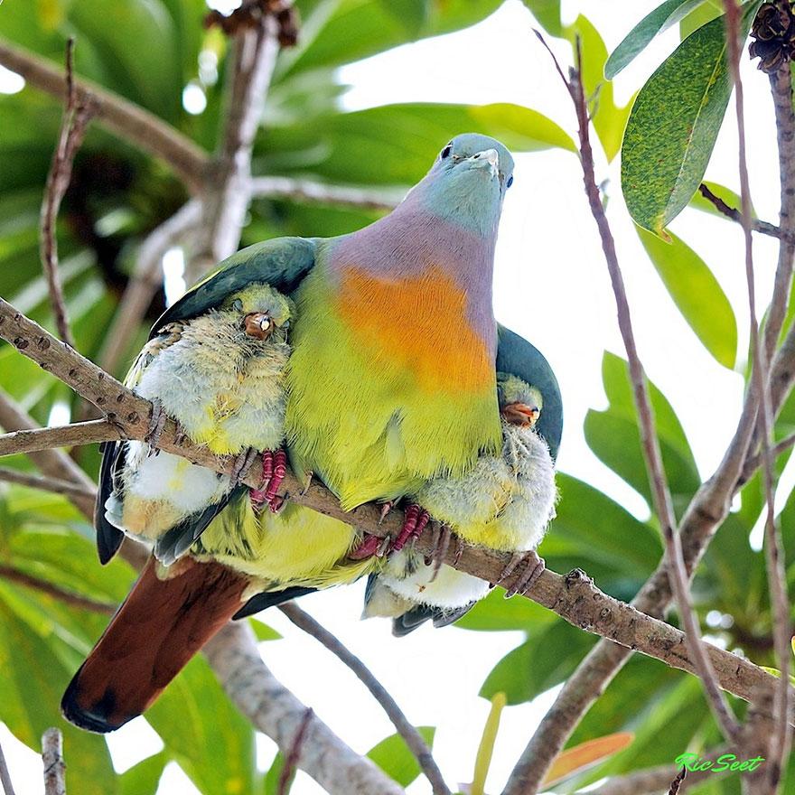 Отцы и дети в царстве животных - 25 самых очаровательных фотографий