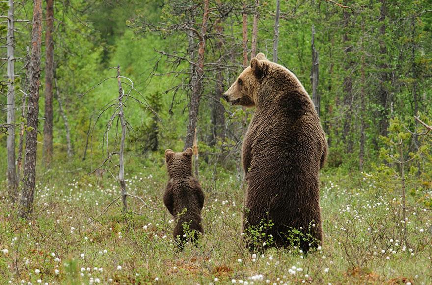 Отцы и дети в царстве животных - 25 самых очаровательных фотографий-32