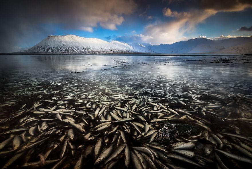 Райская зима в Исландии. Фотограф Эрез Маром