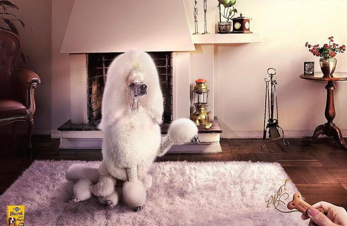 """Картинки по запросу Pedigree: """"Дрессировка собак"""""""