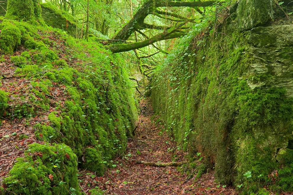 Ирландия - замки, скалы и красивые зелёные пейзажи