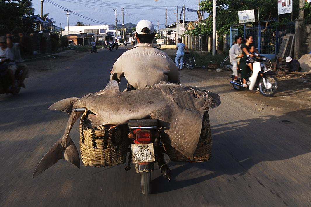 Находчивые вьетнамские мотоциклисты