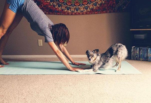 Йога в исполнении животных-8