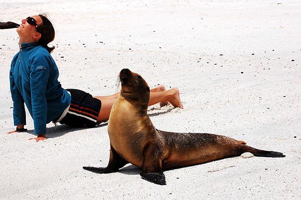Йога в исполнении животных-11