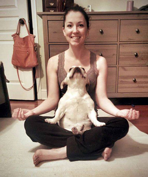 Йога в исполнении животных-4