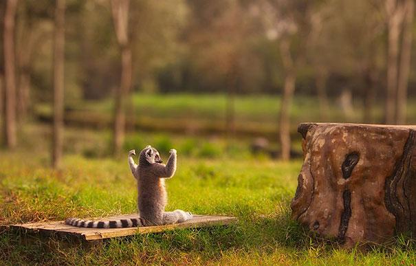 Йога в исполнении животных-29
