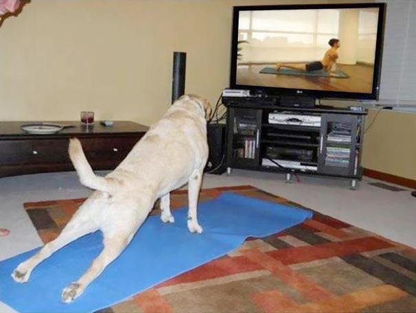 Йога в исполнении животных-17