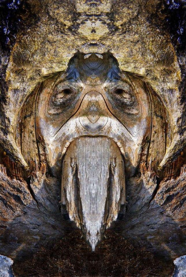 lesnie-obrazi 2