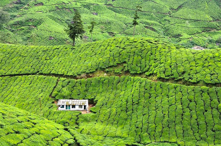 Дом на чайной плантации, Муннар, Индия