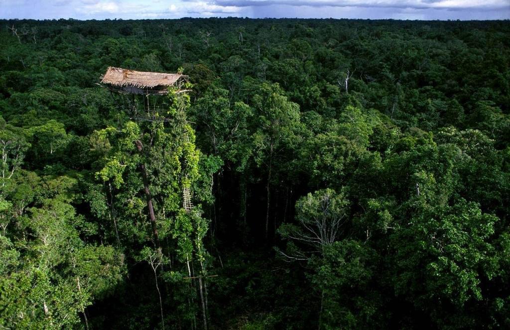 Дом племени Короваи на дереве, Папуа-Новая Гвинея