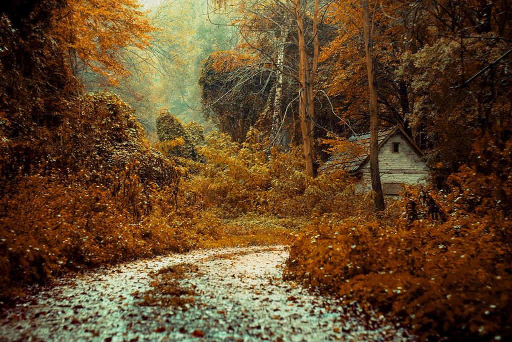 Дом в лесу, Венгрия