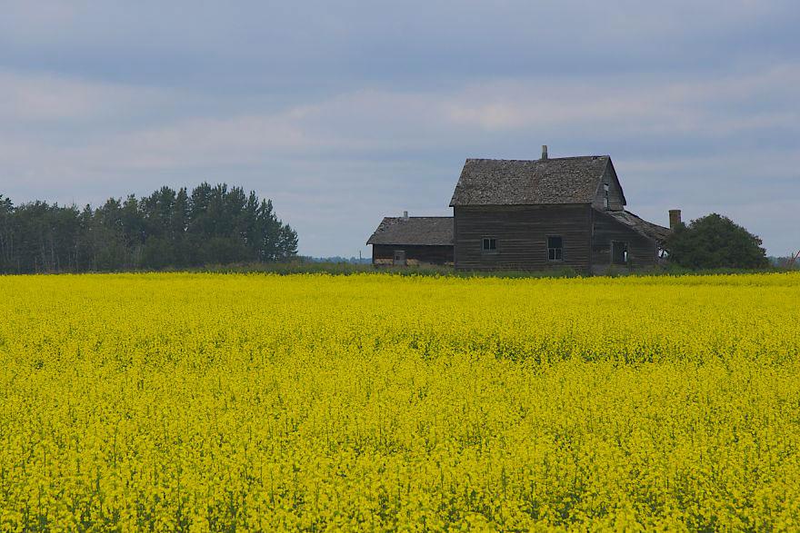 Дом на полях