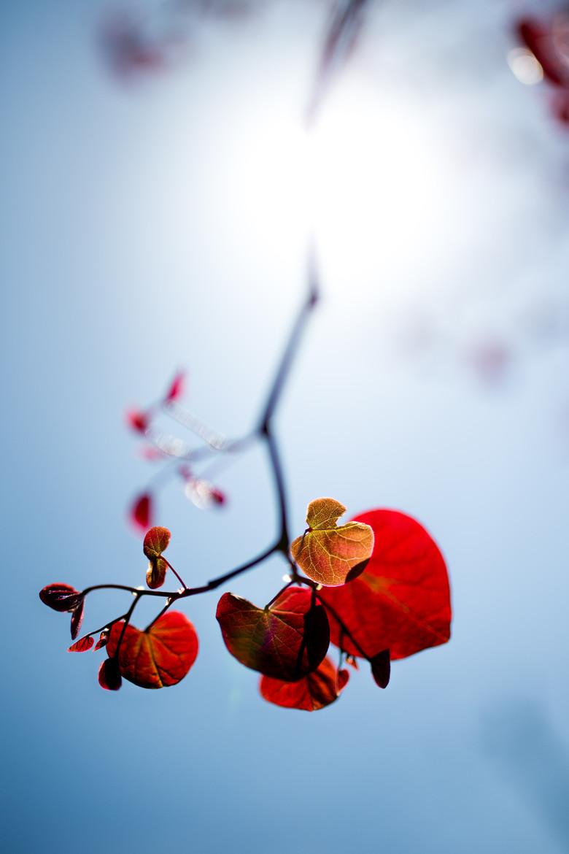 Вспыхнувшая весна