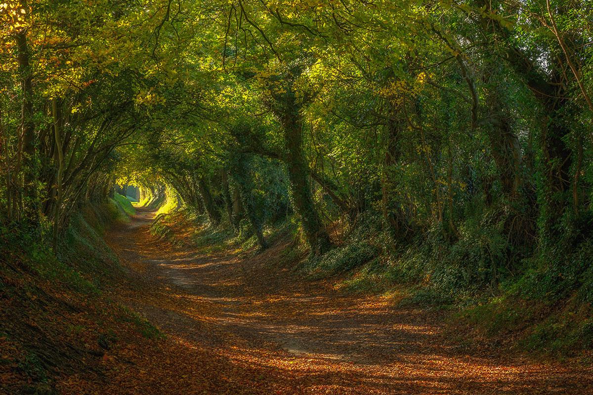 Осенний шарм в лесу - 15 великолепных фото