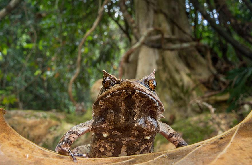 Фотографии редчайших лягушек в мире-3