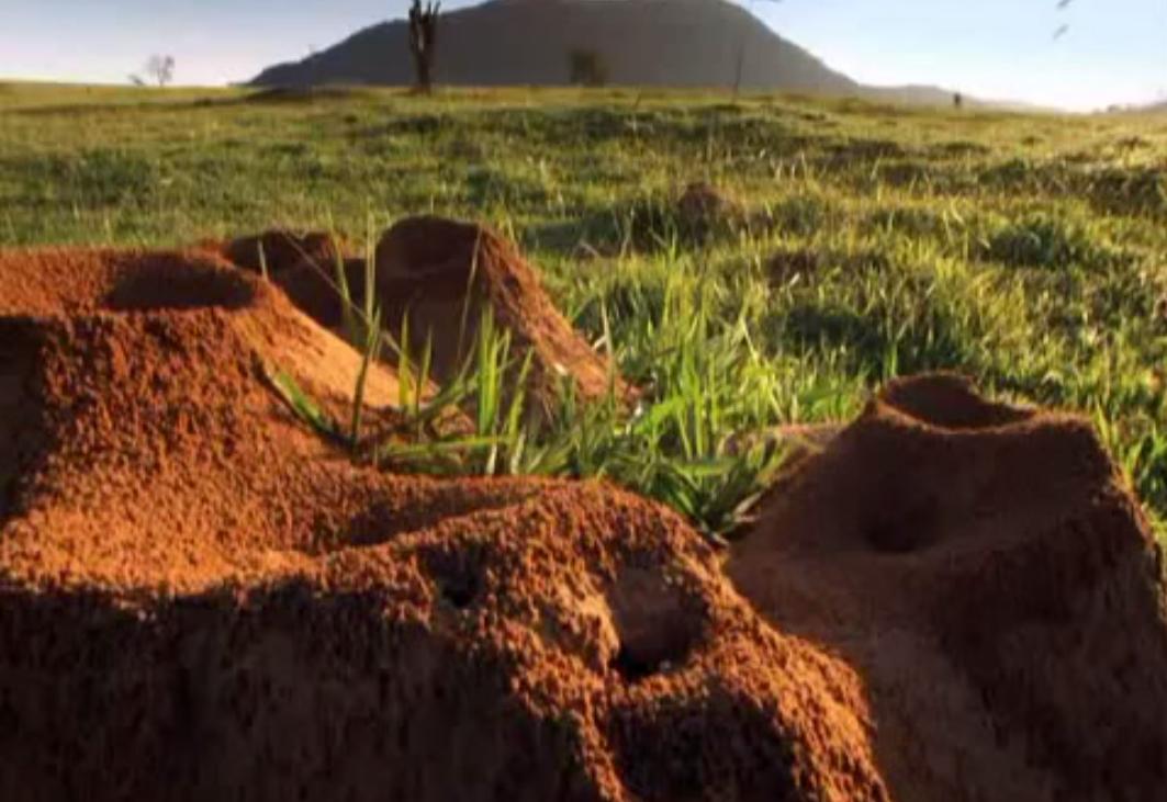 Учёные раскопали колоссальный подземный город муравьёв