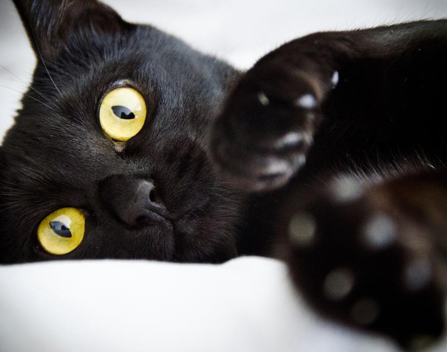 картинки черных кошек аниме