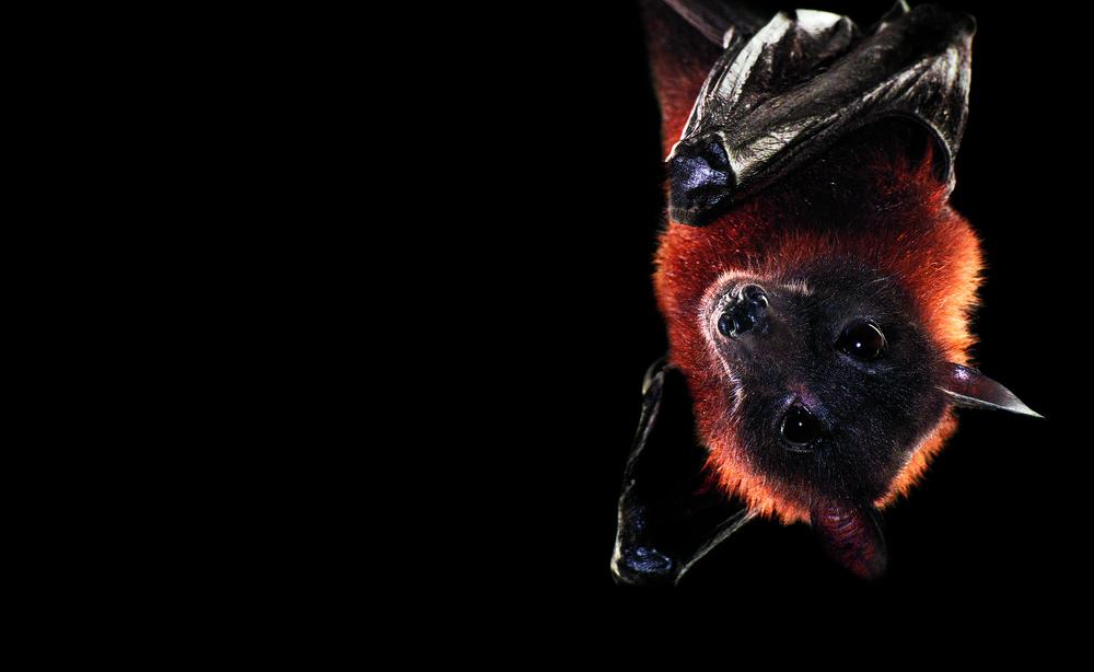 Ночные животные - 7