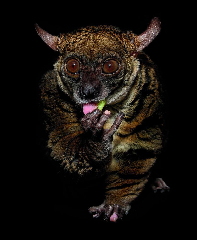 Ночные животные - 9